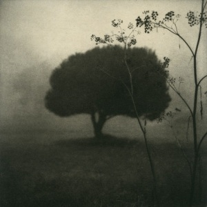 #5 Tree from the Feld Und Fler photogravure series by Max Kellenberger at Photo L.A.