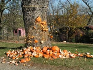 The short life of a pumpkiin.... (Photo courtesy of Machine Project)